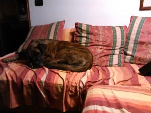 sheila sul divano