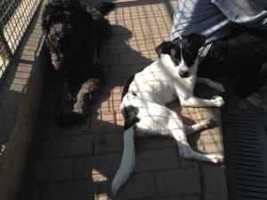 Daisy e Jack 1