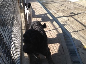 Daisy e Jack 2