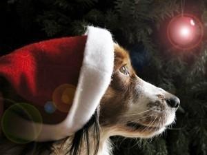 cane-che-aspetta-il-natale