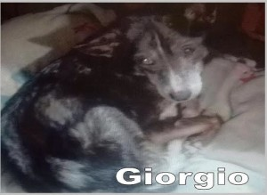 Giorgio - slide