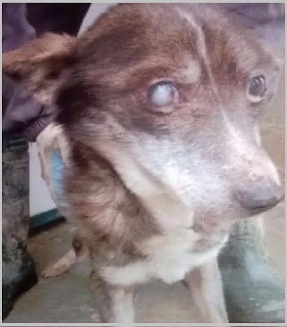 Lega nazionale per la difesa del cane sezione di pavia - Se l ufficiale giudiziario non trova nessuno a casa ...
