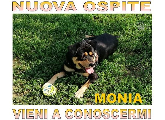 Nuovi Ospiti – Monia