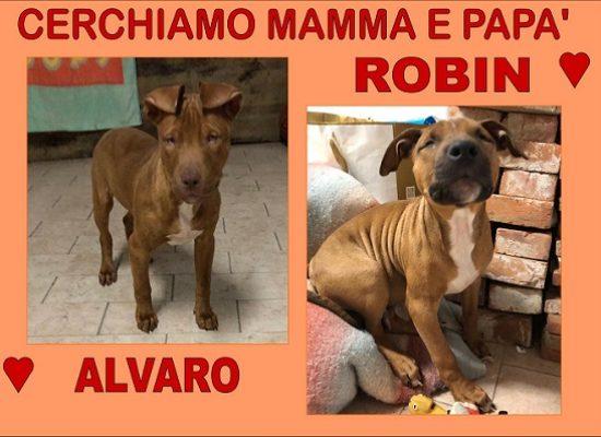 Robin e Alvaro cercano casa urgentemente !!!