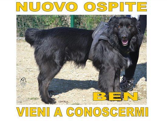 Nuovi Ospiti – Ben
