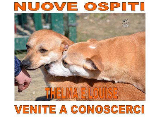 Nuovi Ospiti – Thelma e Louise
