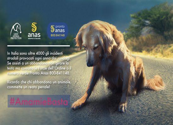 #AmamieBasta – campagna contro l'abbandono